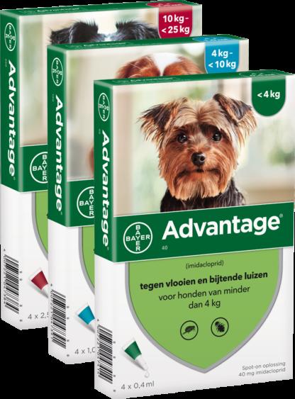 Advantage 40 Hond (tot 4kg)